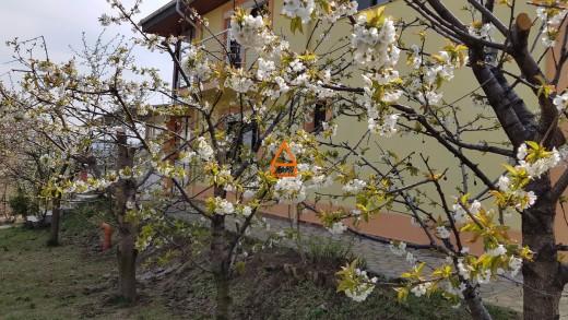 Casa de vanzare in Iasi, Bucium - 310 mp, 290000 EUR